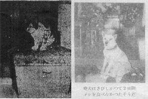 下山事件と犬と猫